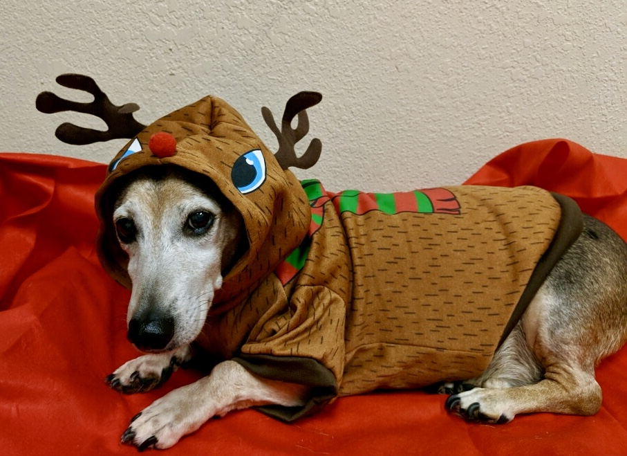 Charlie the Holiday Hound!